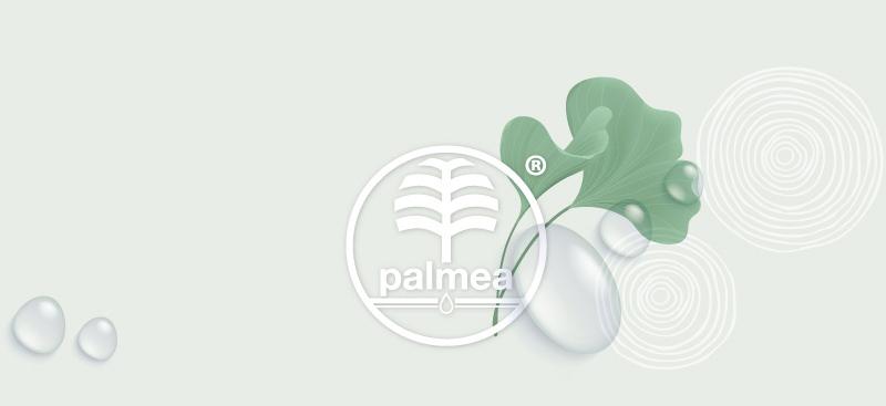 palmea dattero